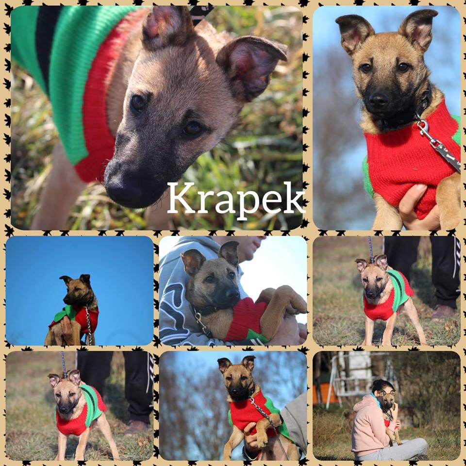 Krapek