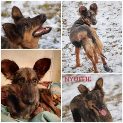 Nyuffie